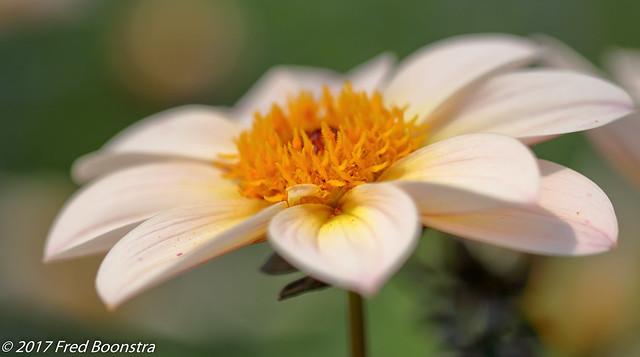 Summertime in the garden,