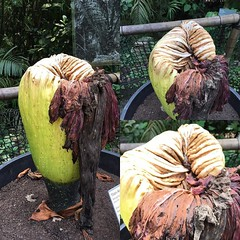 Not sure if plant or alien pod :thinking_face: #edenproject #nofacehuggers