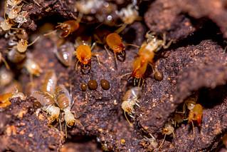 Termites in Cuyabeno Nature Reserve (Ecuador)