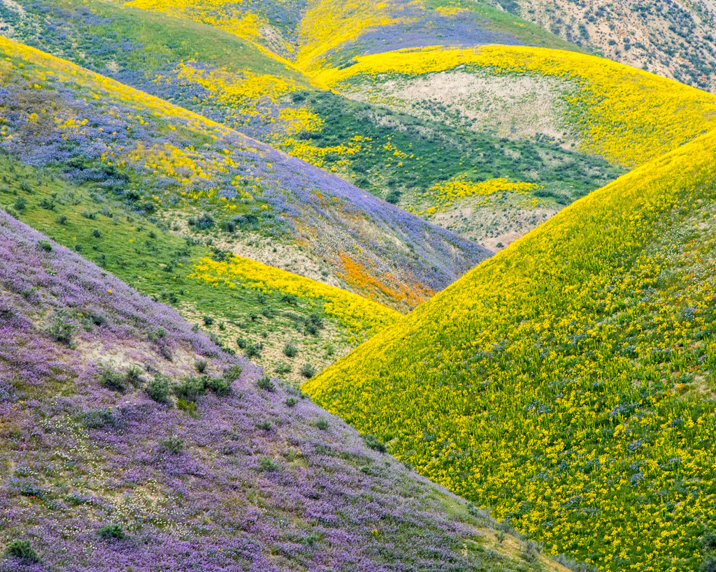 Patterns of the superbloom at Carrizo Plain National Monument