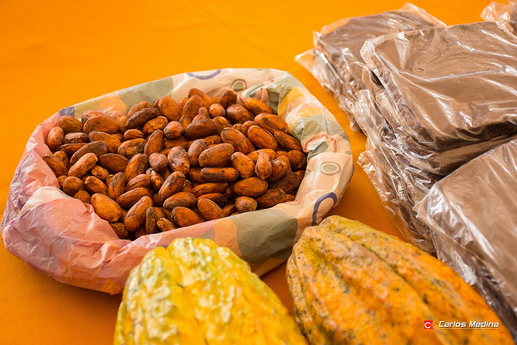 Cacao en Zamora Chinchipe @carlosmedinav77 (1)