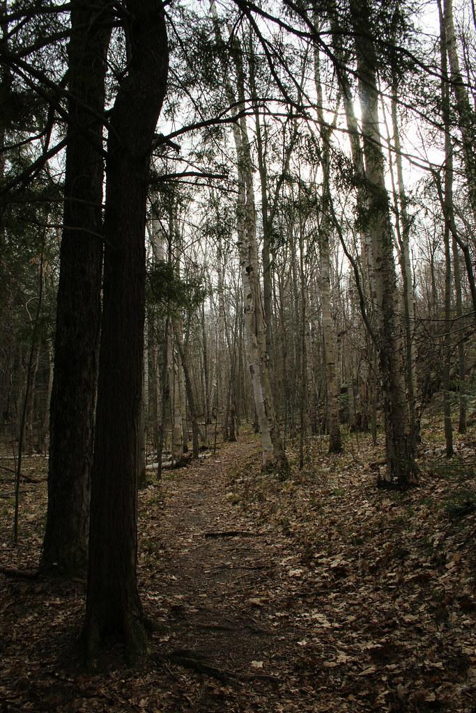 Silhouette Trail 04