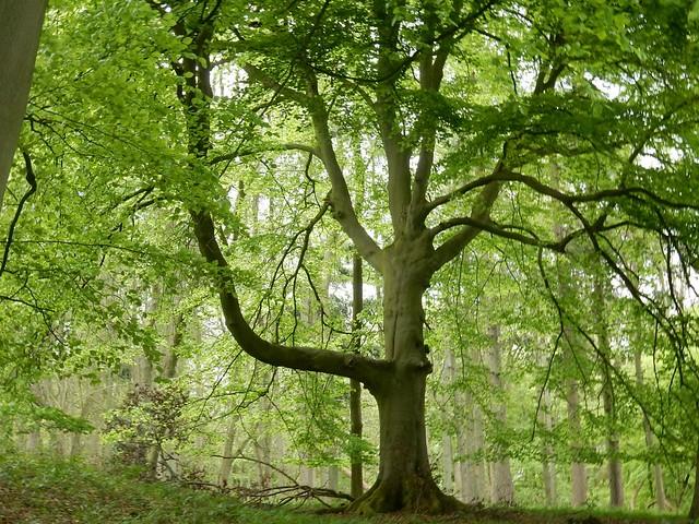 Tree silhouettes 2, Nikon COOLPIX S9700