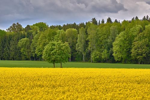 Pair of Twins - Zwillingspaar - rural Landscape
