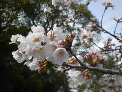 jap 2013 iga-ueno 019