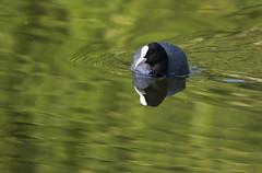 Birdrace