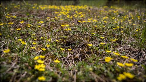 Spring . Flower