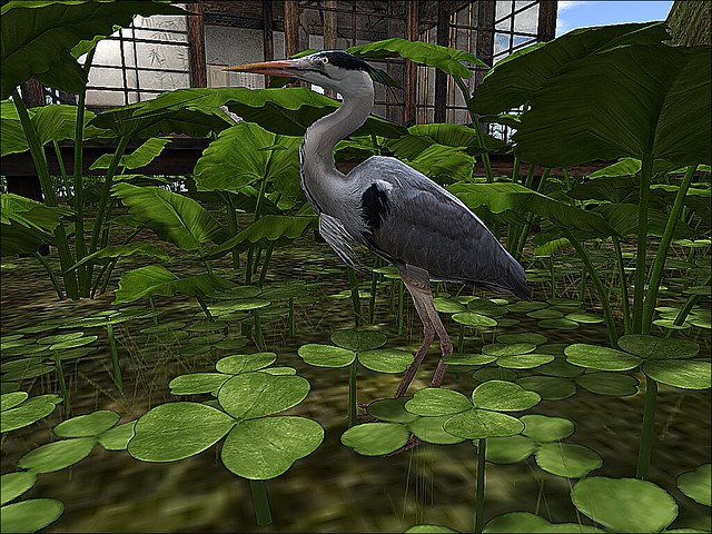 Lick - Asian Fusion - Great Blue Heron In the Undegrowth