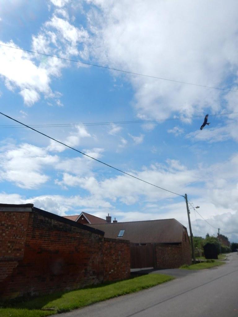 Red Kite Thame Circular