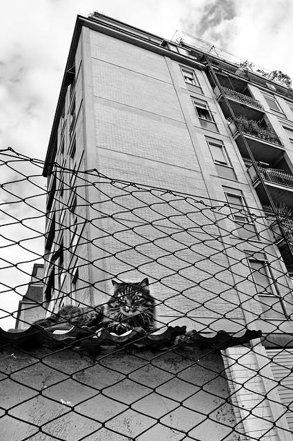 Animals & the city III, Nikon D90, AF-S DX Zoom-Nikkor 18-70mm f/3.5-4.5G IF-ED