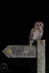HolderPublic Footpath