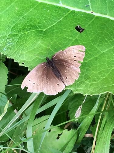 fragile butterfly