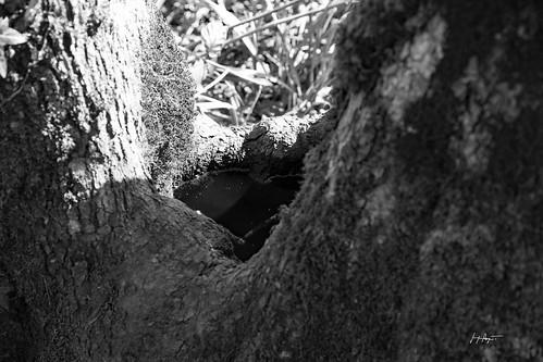 Un cœur au creux d'un tronc (Jura) (D6_10532)
