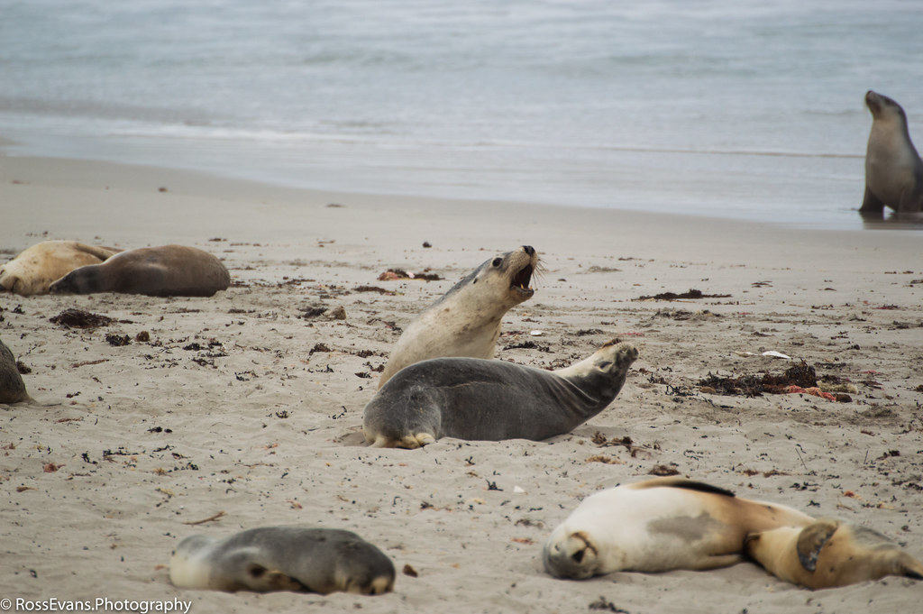 Seal Bay Conservation Park South Australia Tripcarta