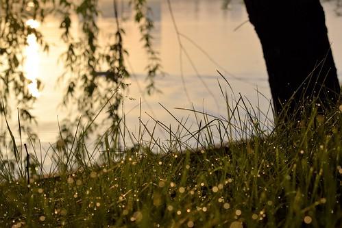 dew nature sunrise morning light outside blur nikkor dark herastrau