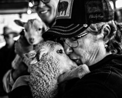 Maryland Sheep and Wool Festival, 2017