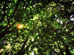 Nature's Ceiling