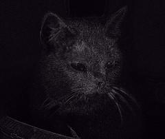 Un gato en Luvina.