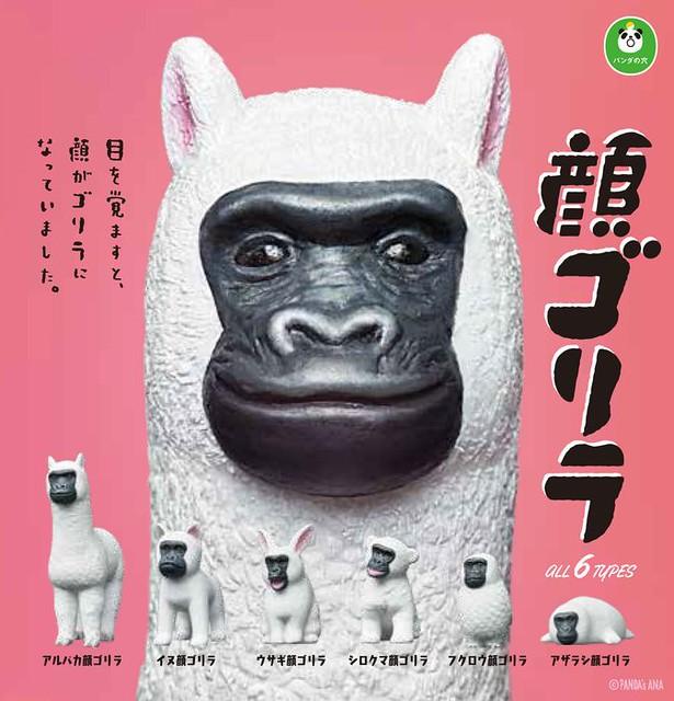 【官圖公開】超有事的爆笑神企畫!熊貓之穴又一笑破內褲巨作【猩猩臉】パンダの穴 顔ゴリラ