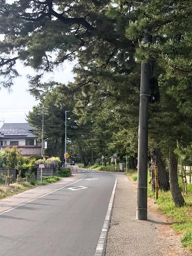 マツ並木に到着 (@ 御油の松並木 in 豊川市, 愛知県)