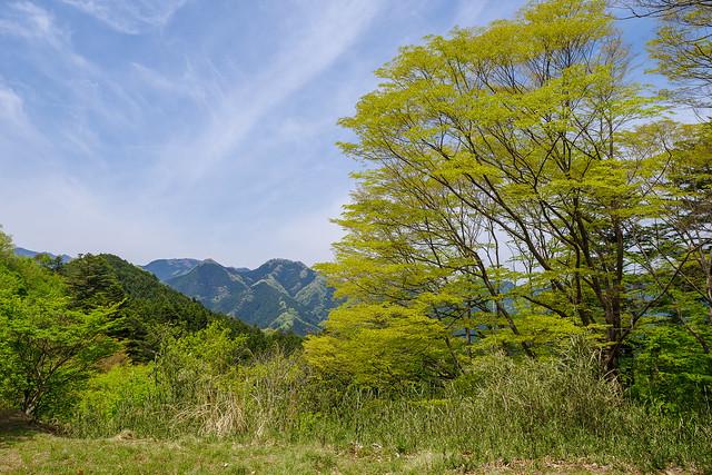 伊豆ヶ岳と古御岳を展望@子ノ権現手前