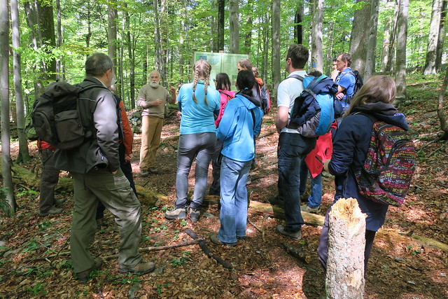 Workshop about presenting old-growth forests to children