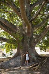 Cuba - Big Ceiba Tree