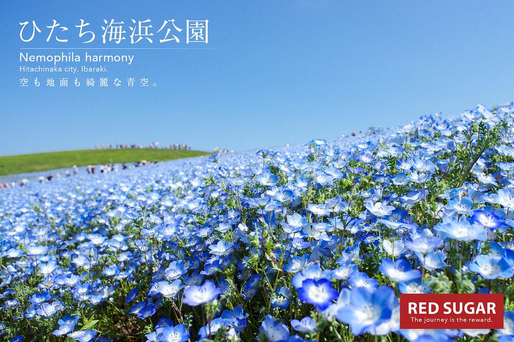 2015_04_30_ひたち海浜公園