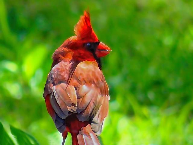 birdie birdie, Sony DSC-HX50V