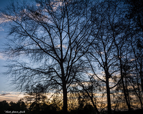 dawn sunrise nature trees sky