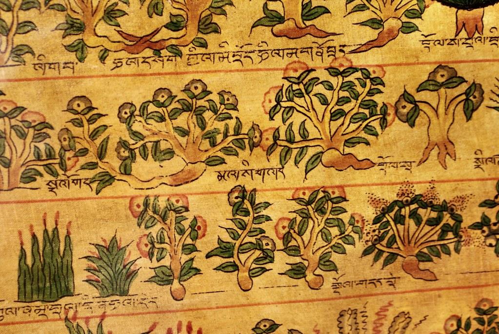 Illustration botanique indienne (ou tibétaine) au musée ethnographique de Gênes.