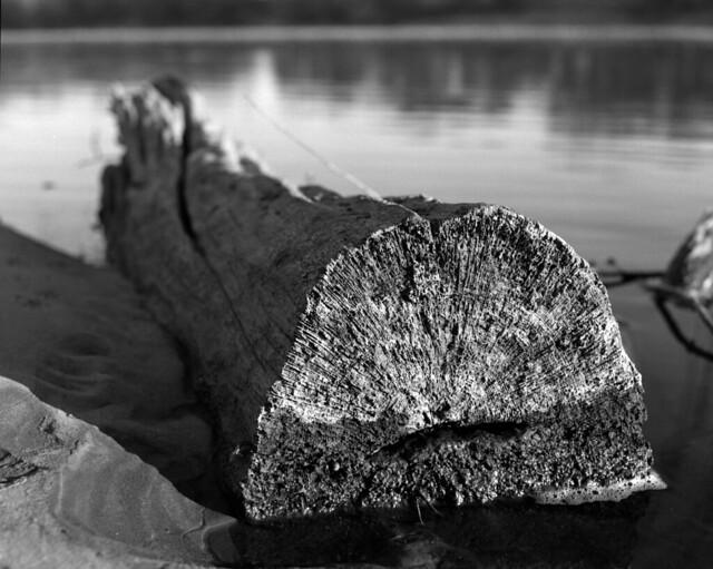 mississippi driftwood