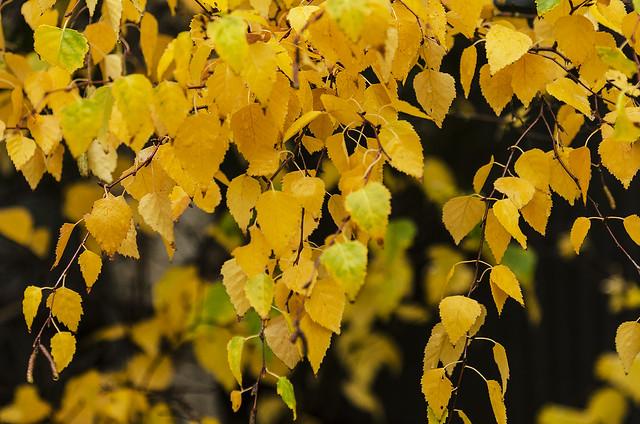 Autumn bliss, Nikon D7000, AF-S Nikkor 24-120mm f/4G ED VR