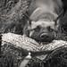 Puppy Bitework by Songdog Studios