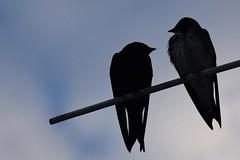 Montrose Harbor and Montrose Point Bird Sanctuary