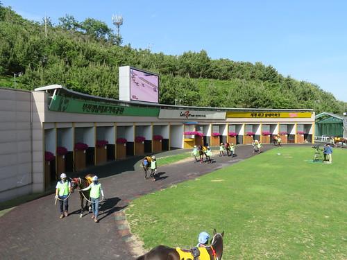 釜山慶南競馬場のパドック周回の様子