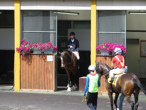 釜山慶南競馬場の誘導馬