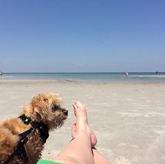 Bliss. #capecodgetaway, #bookandbeachandbabydog