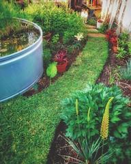 Mown Path Garden vttsh6