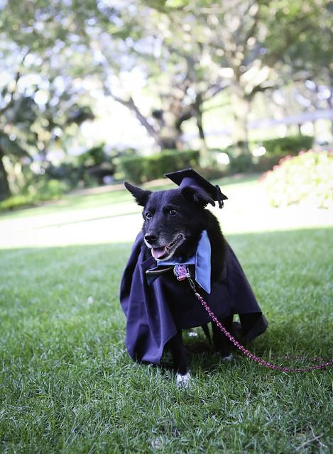 Eckerd College Pet Commencement 2017