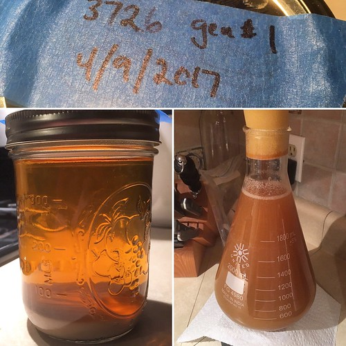 Culturing up my 3726 for this weekend's brew club Sorachi Ace Saison clone. (Well… to ferment my share, at least.) #homebrewing