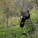 Endemic Birds of Peru