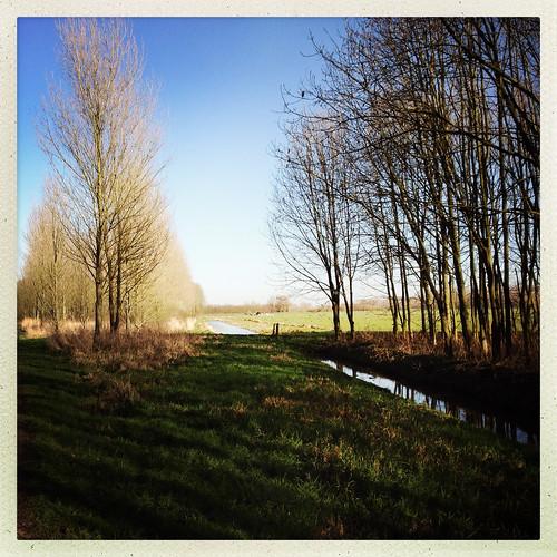zuidholland bomen wandelen sloot nederland planten waterwegwerfenhaven wegenwaterbouwkwerken travel holland netherlands niederlande delfgauw