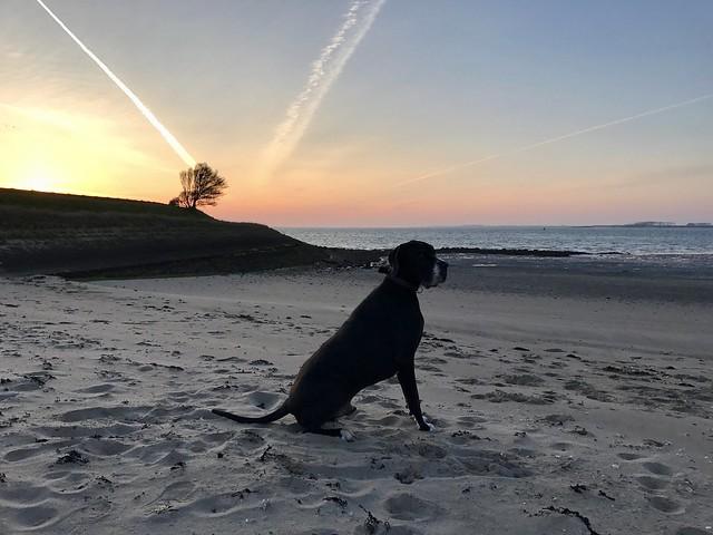 Deense Dog aan zee