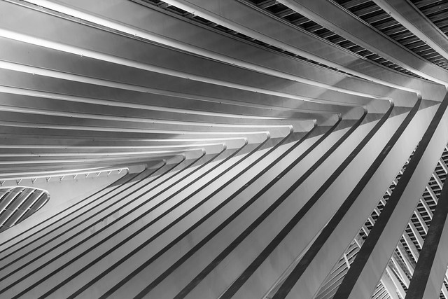Cuved lines (monochrome)