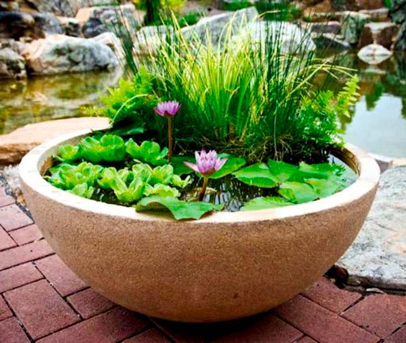 Amazing Ideas of How to Make Mini Ponds in Pots