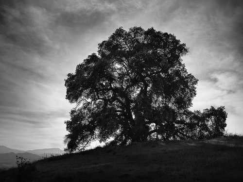 2017 bw california geotag nexus6p outdoor santateresacountypark tree treescape
