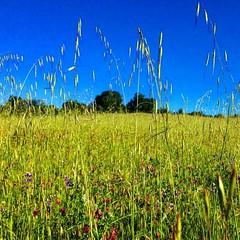 #nakedyourselves #spriniscoming #wildgrass #wildflowers #california #ranch