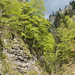 Limestone Gorge (Judith Rolfe)