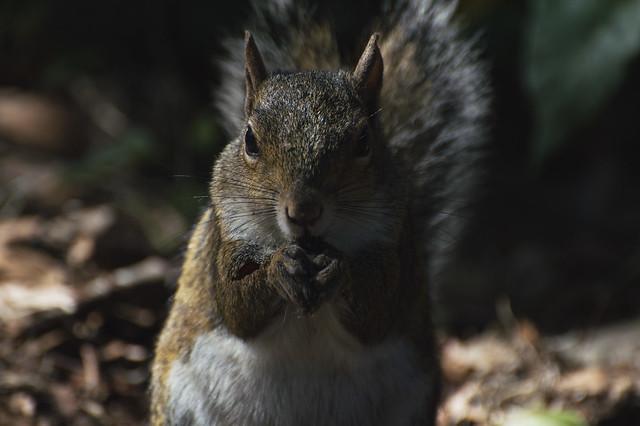 Squirrel's Mid-Afternoon Snack, Nikon D3200, AF-S Nikkor 28mm f/1.8G